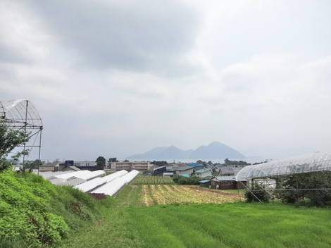 180723さくらんぼ狩り (10).JPG