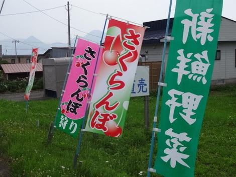 180723さくらんぼ狩り (1).JPG