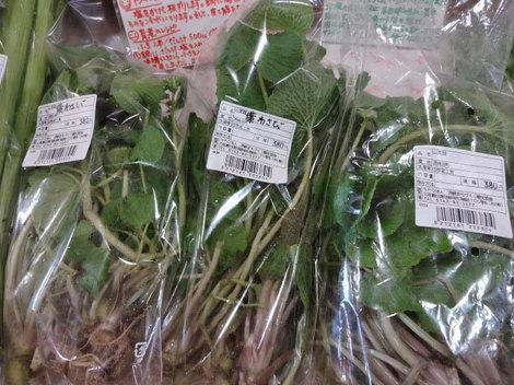 170502山菜 (3).JPG