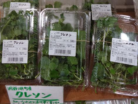 170502山菜 (4).JPG