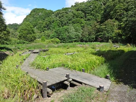 190825財田親水公園 (10).JPG
