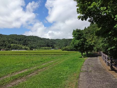 190825財田親水公園 (7).JPG