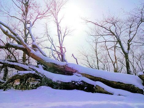 200125洞爺湖冬 (7).JPG