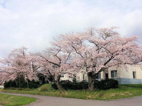 200516洞爺高校 (4).JPG