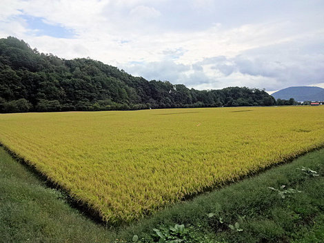 200919財田 (3).JPG
