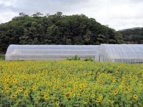 200919財田 (7).JPG