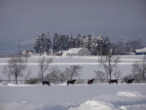 201231雪景色 (4).JPG