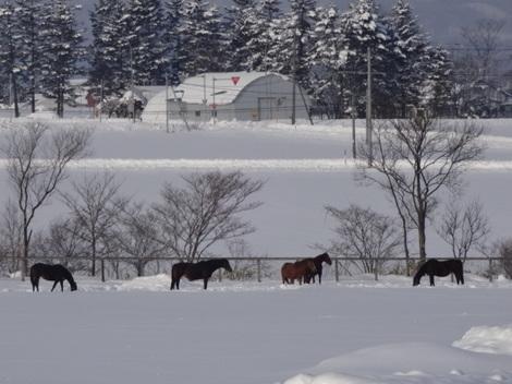 201231雪景色 (5).JPG