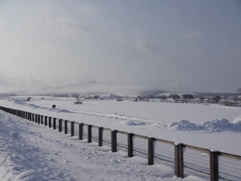 201231雪景色 (8).JPG